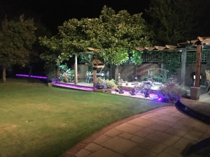 The garden by night